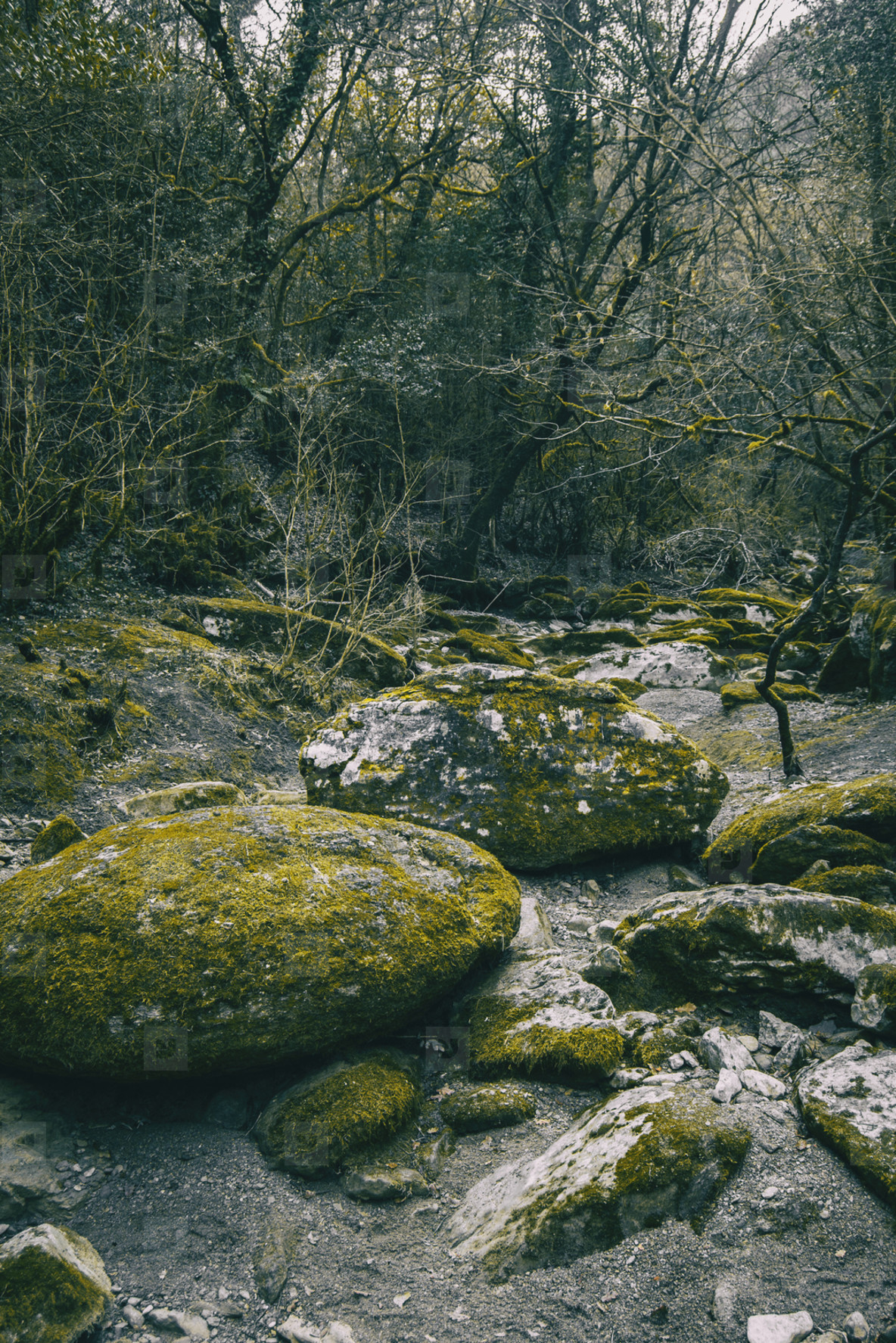 Large stone path with green moss in the middle of the forest