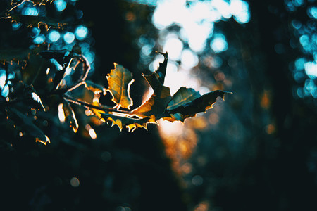 Leaves in the dark of a forest illuminated by a ray of sun