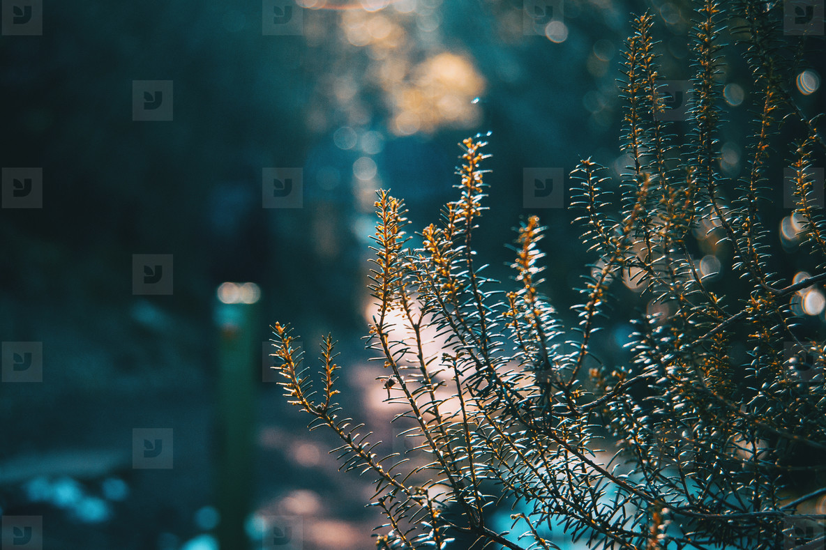 Close up of some branches illuminated by a ray of sun