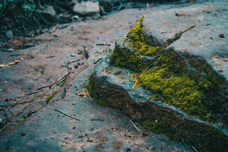 Close up of soil with stones and moss