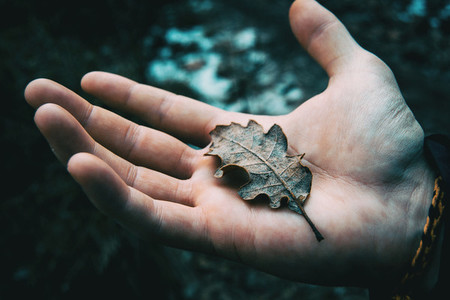 Close up of a mans hand holding a dried leaf