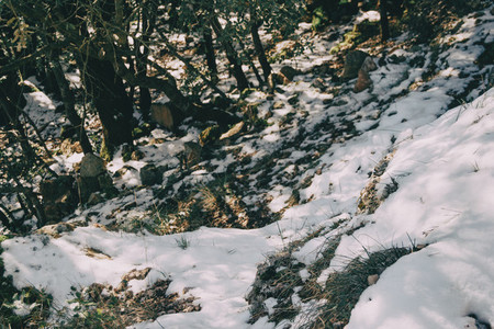 Snowy landscape in the midst of nature
