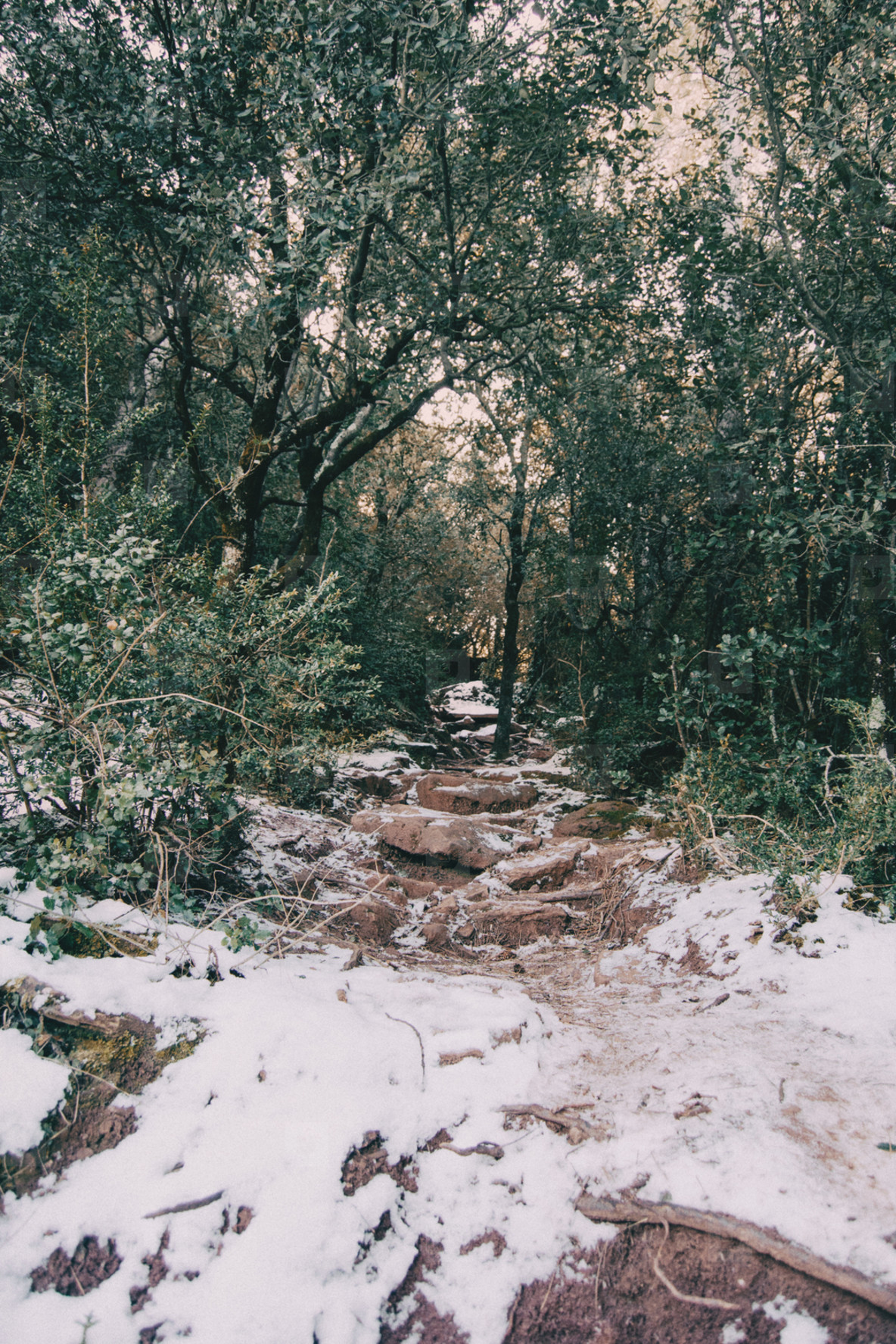 Snowy mountain trail
