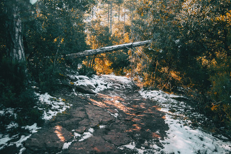 dirt path in the mountain with a fallen tree