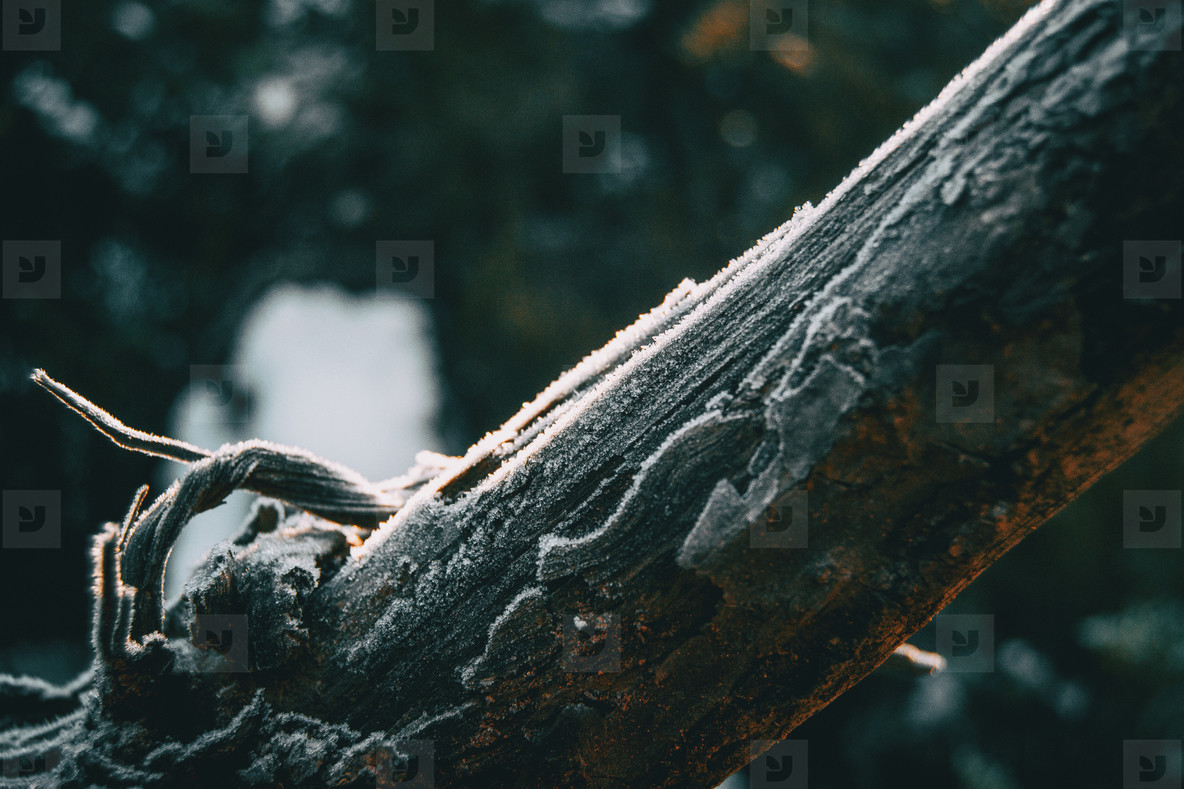 Pieces of tree wood bark covered by a thin layer of snow