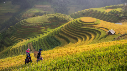 Terraced rice field inside fog and morning ray in Mu Cang Chai