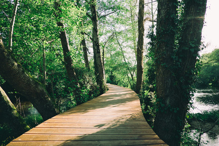 wood path on the forest