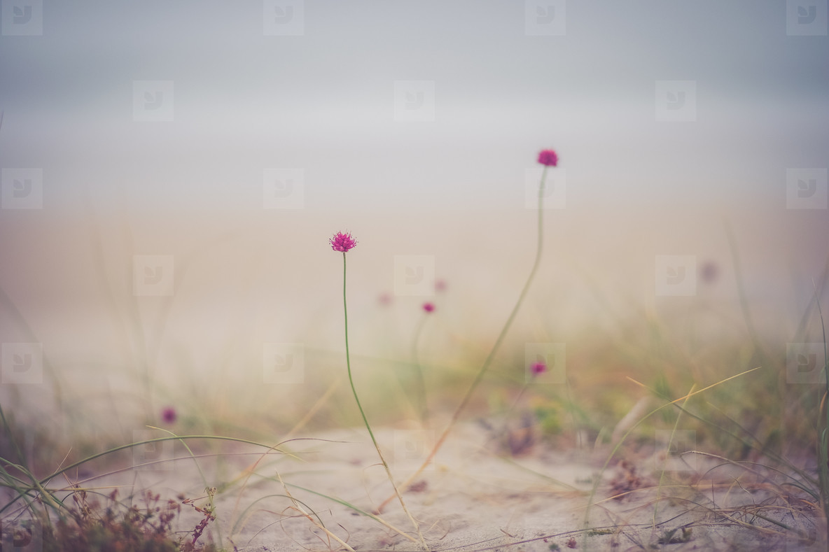 floer and fog
