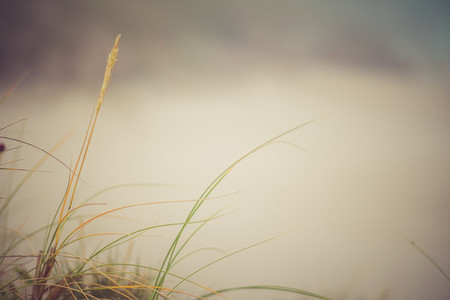 grass and fog