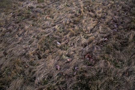 Autumn grass pattern