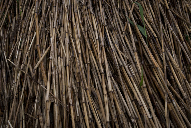 Brown bulrush pattern