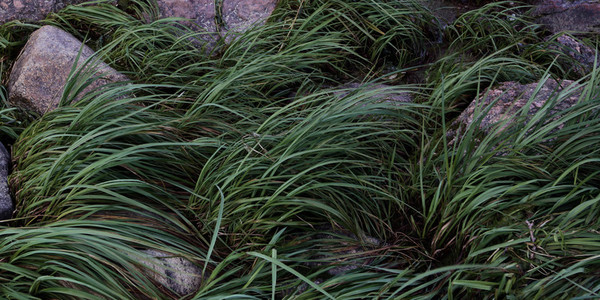 Grass and stones on riverside