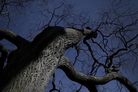 Tree opposite the blue sky