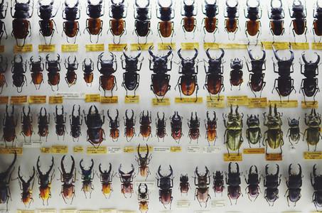 Beetles   bugs pattern
