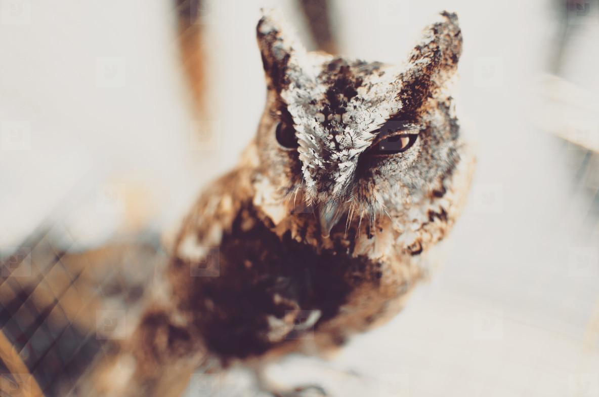 Young owl portrait