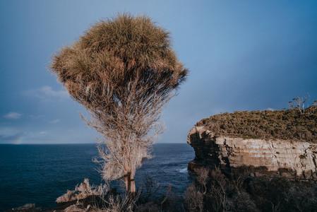 Tasmania 38