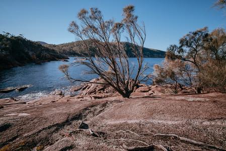 Tasmania 84