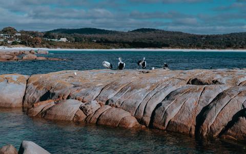 Tasmania 99