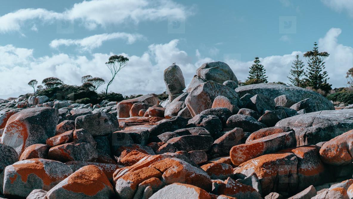 Tasmania 102