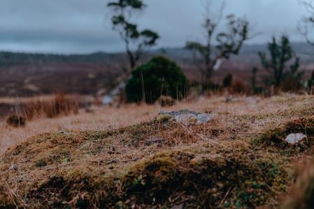 Tasmania 115