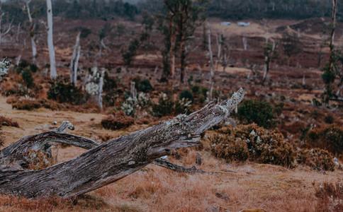 Tasmania 117