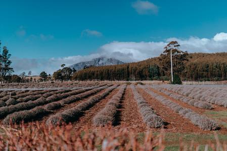 Tasmania 127