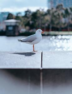 Melbourne Birds 1