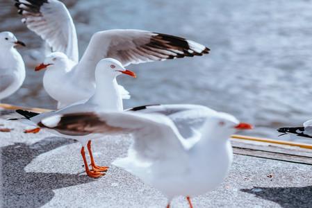 Melbourne Birds 2