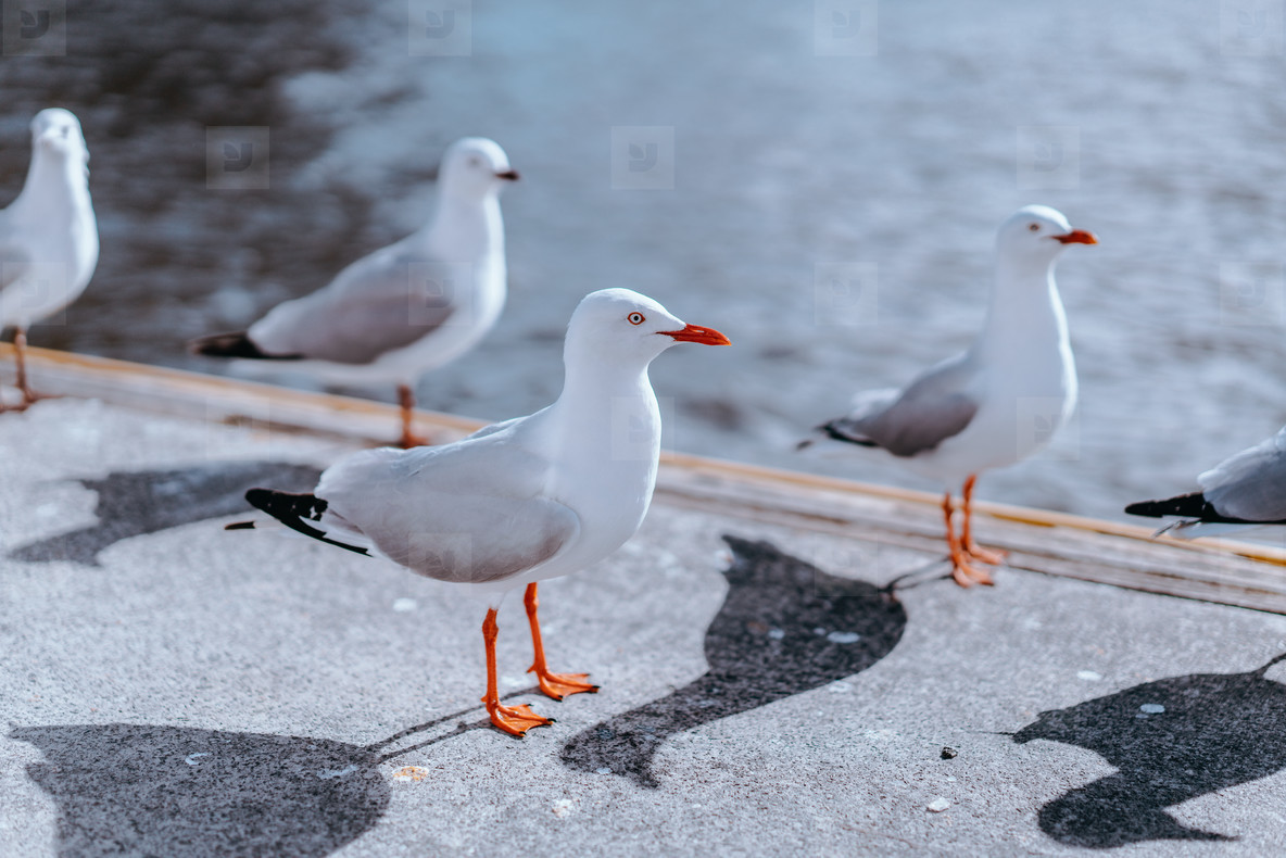Melbourne Birds 3