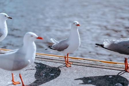 Melbourne Birds 4