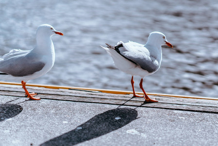 Melbourne Birds 5