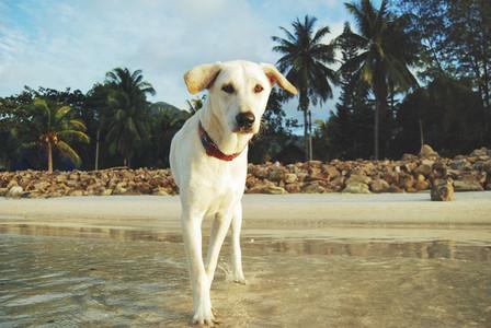 White dog on a beach