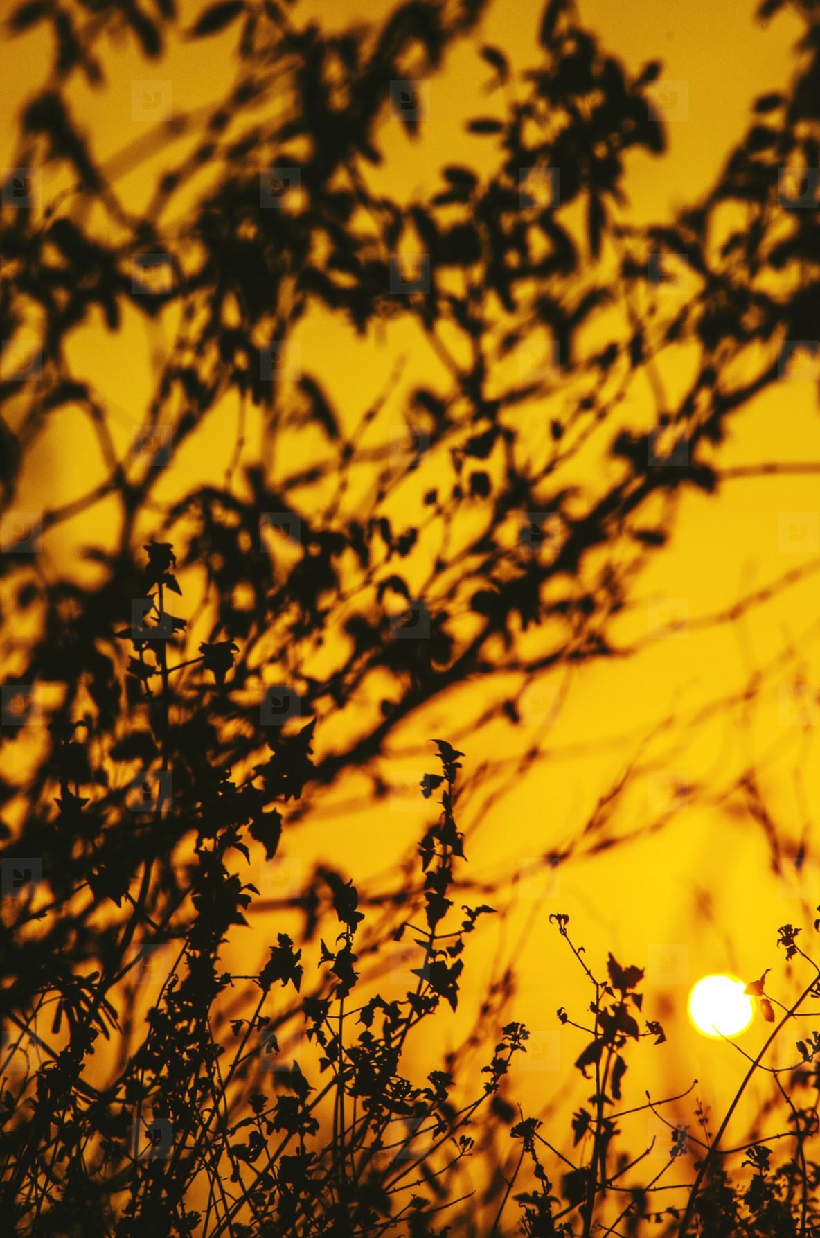 Gold floral at sunrise