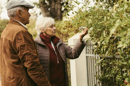 Elderly couple looking at flowers on fence