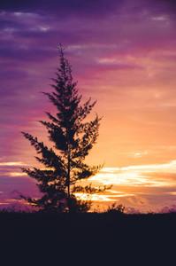 Tropical Xmas Tree At Sunset