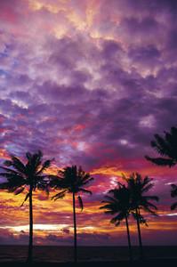 Tropical Postcard