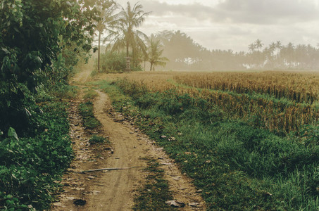 Road through rice fields  Bali