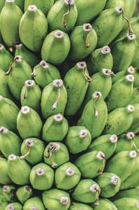 Green  Unripe Bananas Pattern