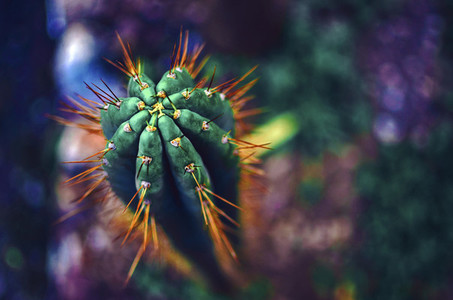 Colorful Psychedelic Cactus