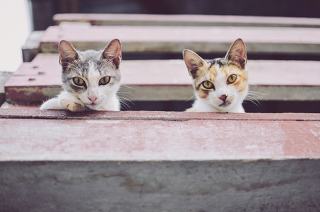 Two Curious Cats