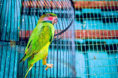 Bright  Vibrant Green Parro