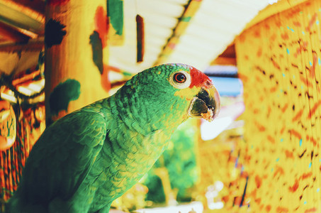 Bright Green Parrot
