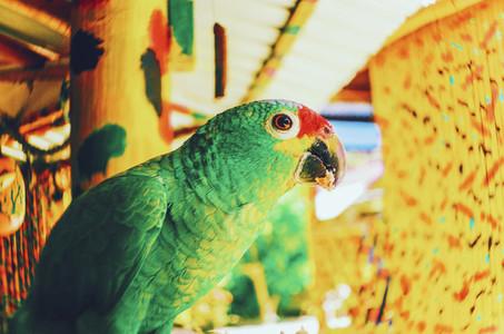 Bright Green Parrot