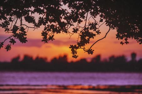 Vivid Purple Sunset Background