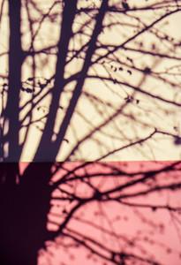 Tree shadow on the wall