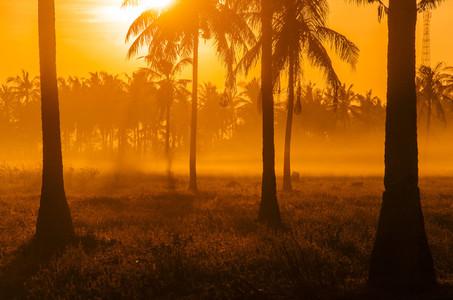 Palm Tree Field At Dawn