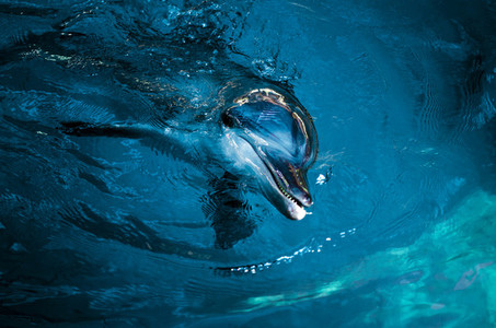 Playful Dolphin Up Close