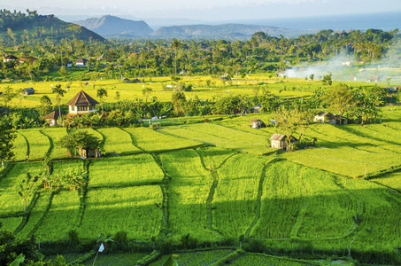 Green Balinese Fields