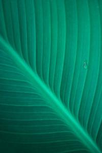Palm Leaf Background