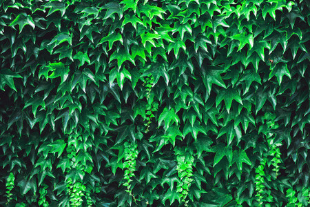 Green Vegetation Background